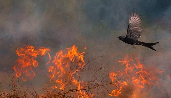 Il rischio di incendio boschivo