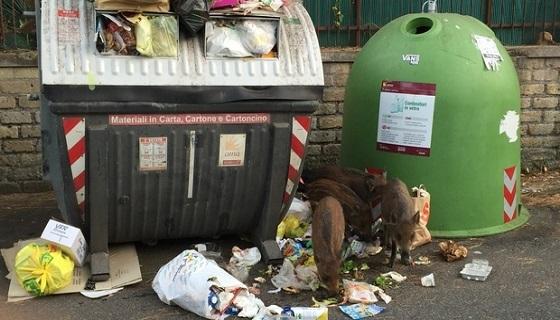 Roma: niente oasi per ungulati