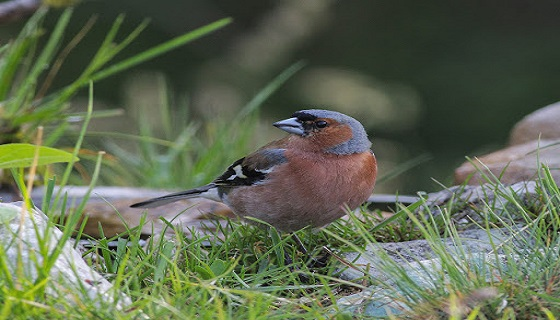 Gli Uccelli come indicatori ecologici