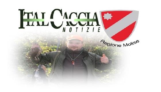 Molise: Caccia di notte, Italcaccia boccia Imprudente: «Atto illegittimo, in contrasto con la legge 157»