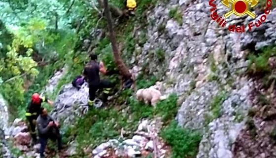 Cane da caccia precipita in una forra, salvato dai Vigili del fuoco