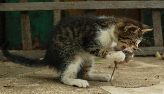 Umbria: Animali, arriva il garante comunale, i compiti