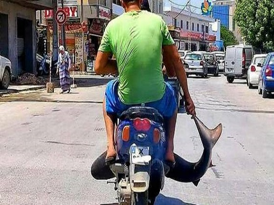 Squalo sullo scooter per le vie del centro, rabbia degli animalisti contro i pescatori