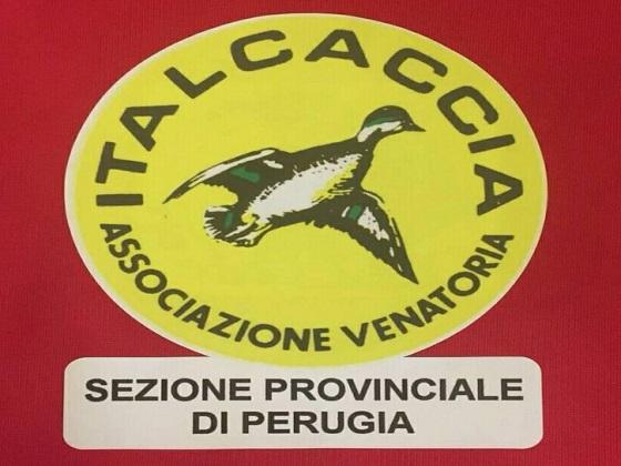 ItalCaccia Sezione Provinciale Perugia