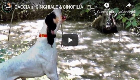 Caccia a Cinghiale & Cinofilia: Finale Nazionale Mute da Seguita ITALCACCIA