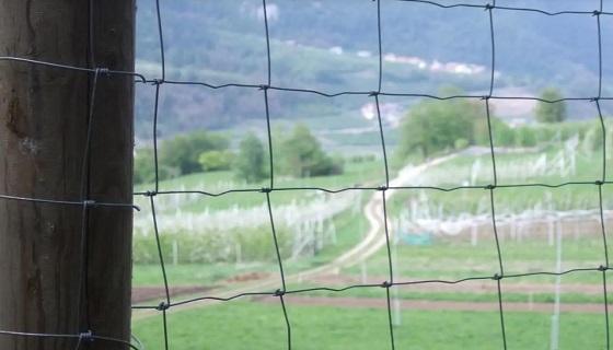 Alto Adige: Danni da animali selvatici e predatori nuovi criteri per i sussidi