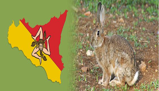 Sicilia: D.A. al calendario Venatorio 2020/2021 si caccia il coniglio…